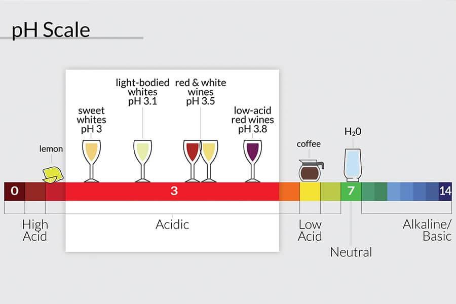 Từ vựng về tính axit của rượu vang