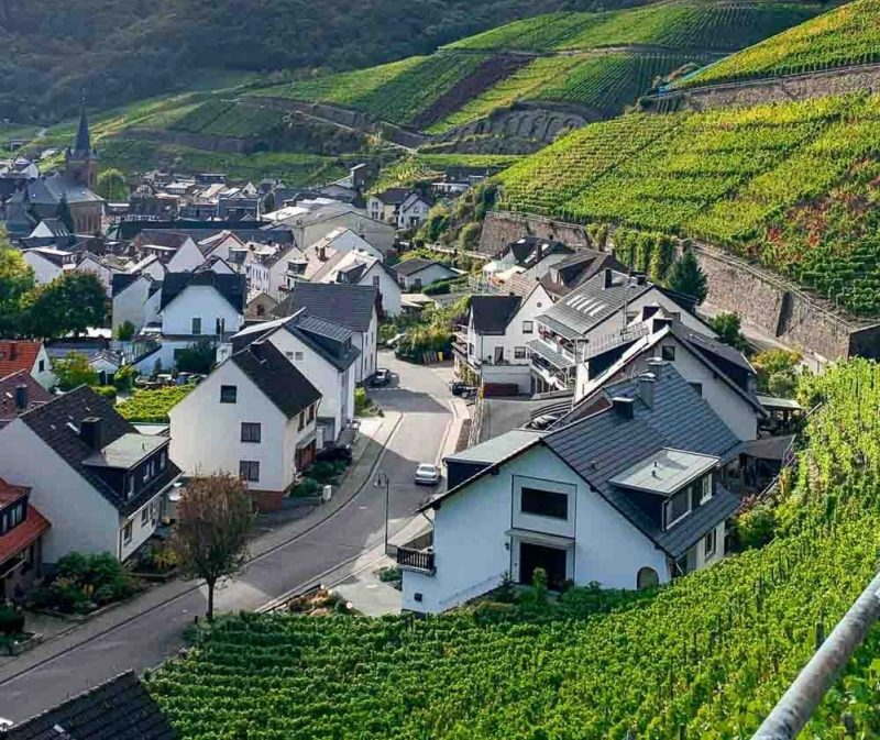 Các vùng trồng nho Pinot Noir nổi tiếng trên thế giới