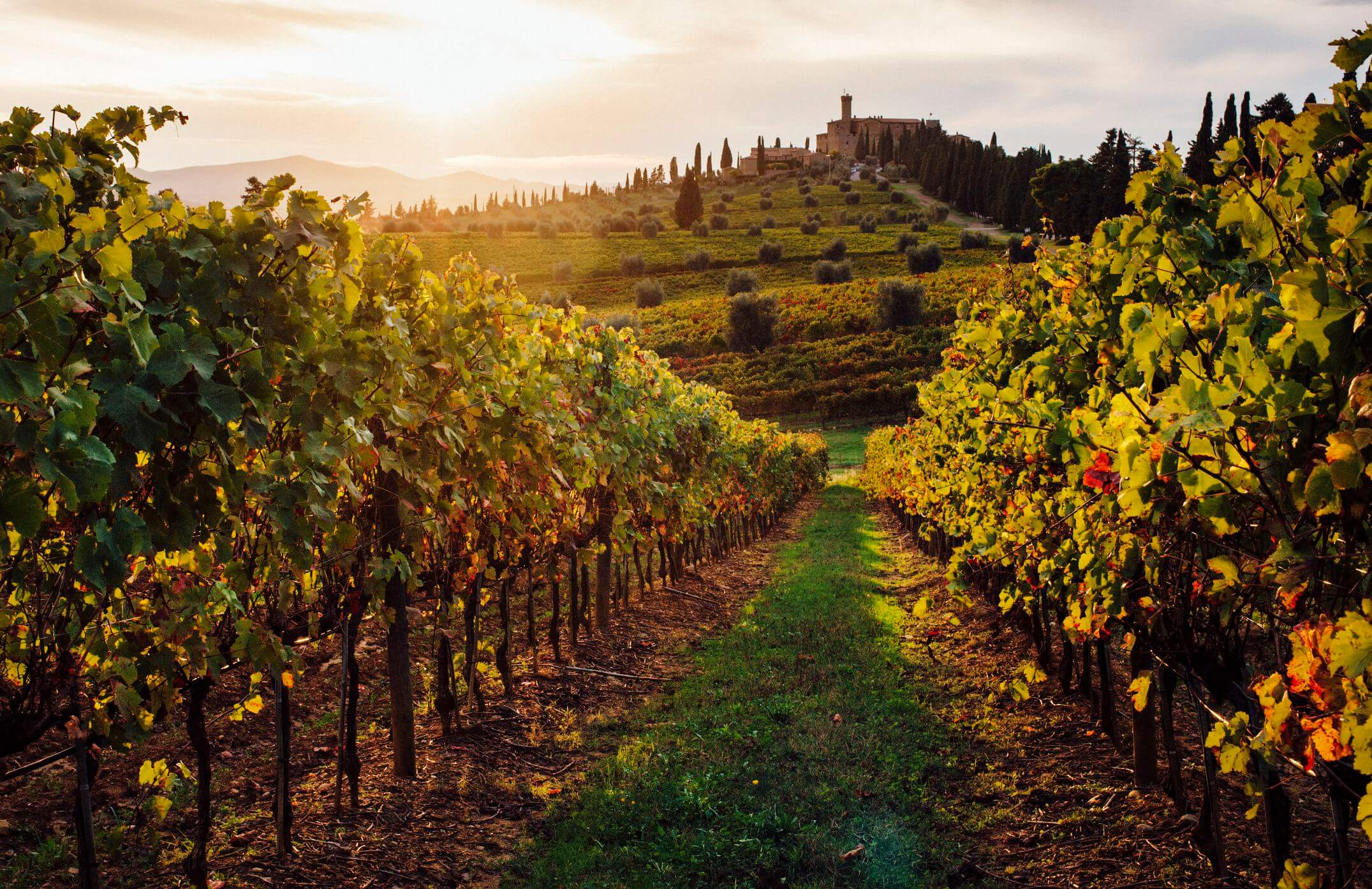 Cùng tìm hiểu về lịch sử rượu vang chianti