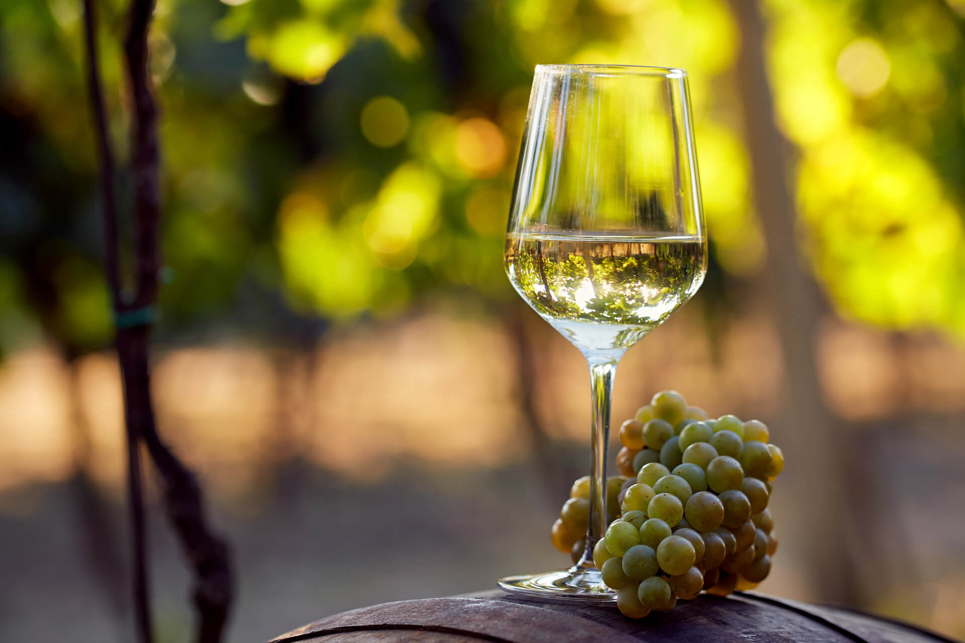 Rượu vang trắng (white wine)
